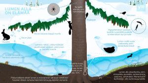 Graafinen kuva, joka kertoo mitä lumen alla tapahtuu