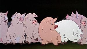 Sikoja animaatioelokuvassa Eläinten vallankumous.