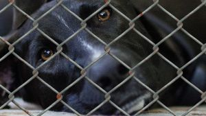 Hund bakom galler.