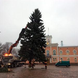 Julgran på Lovisa torg