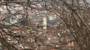 Vy över staden Gjakova i Kosovo genom en taggig buske
