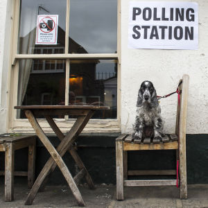 En hund sitter utanför en vallokal i London den 8 juni 2017.