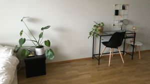 Ett bord med en grönväxt.