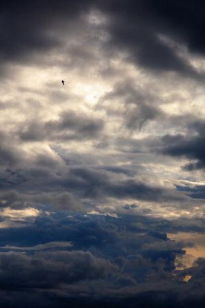 Himmel med dramatiska moln och fågel som flyger högt