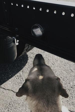 Narkotikahunden markerar fyndet.