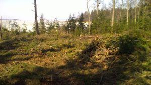 Skog har avverkats på ett frilufts- och strövområde i Härkmeri, Kristinestad.