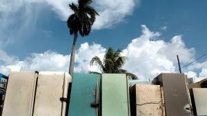 Gamla, olika färgers kylskåp på rad. I bakgrunden palmer.