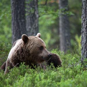 Den förtrollande vildmarken