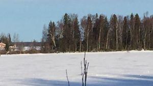 Varg på isen vid Stora Skutskär.