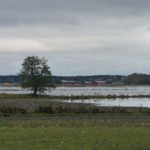 Åkrar ligger under vatten i Härkmeri