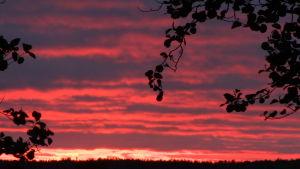 Tulipunainen taivaanranta auringonlaskun aikaan.