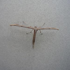 Vad är det för insekt?