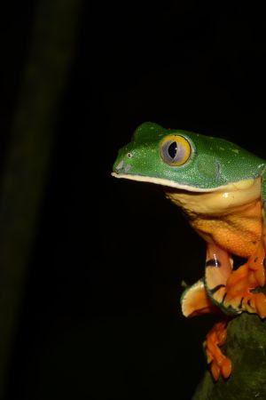 Avara luonto: Kiehtovat sammakot