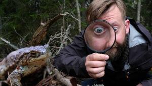 Joakim lax på marken med stort förstoringsglas och enormt förstorat öga i den studerar en groda på marken.