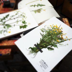 Herbarieblad med pressad sommarbukett