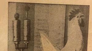 """Kukkokuva Kouluradion vuodne 1946 julkiasusta. Tekstissä kukkoon viitataan kuvatun """"pari vuotta aiemmin"""" Ylen studiolla."""