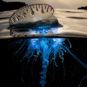Avaran luonnon uusi huikea sarja Sininen planeetta II vie seikkailulle maailman valtameriin.