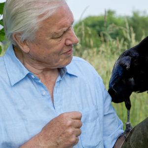 Sir David Attenborough tutkii luonnon ihmeellisimpien eläinlajien ja kasvien elämää.