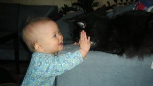 """""""Sällskapsdjur rör sig på samma golv där våra småbarn kryper"""", säger Katariina Thomson. Vissa resistenta bakterier smittar mellan djur och mänskor."""