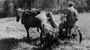 Mies ja kaksi hevosta heinäpellolla (1940)