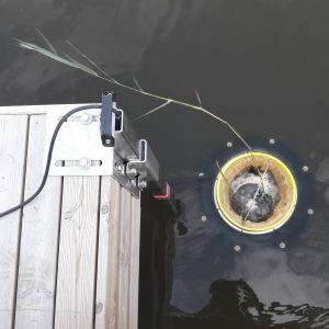 havssoptunnan i vasa som är fastsruvan invid en brygga vid vattenytan där den nu sugit in lite vass