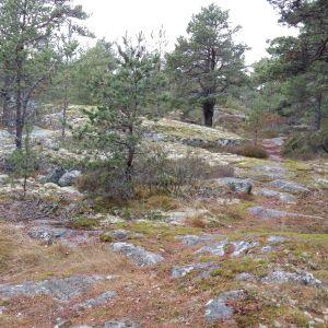 en liten stig går genom ett höstlandskap i skärgården, med kalberg, mossor och små tallar