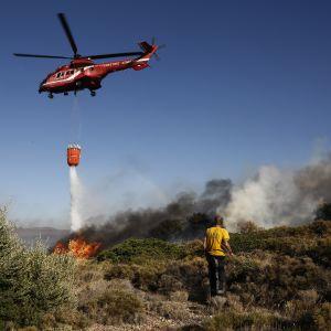 Brandmän och frivilliga släcker markbränder i närheten av Aten den 31 juli 2017. Europa har under juli och augusti 2017 upplevt ovanligt höga temperaturer.