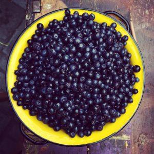 blåbär på fat