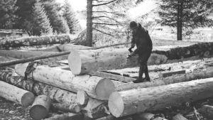 Mustavalkokuva miehestä rakentamassa hirsitaloa Alaskassa