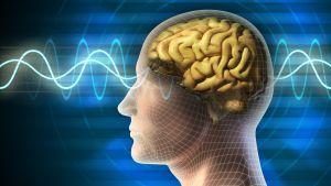 Graafinen kuva ihmisen päästä, sivukuva jossa huomio aivoissa. Aivosähkökäyrää.
