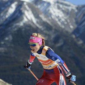 Therese Johaug i sina senaste världscuptävlingar i Canmore i mars 2016.