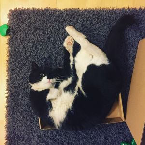 Katt söker nytt hem.