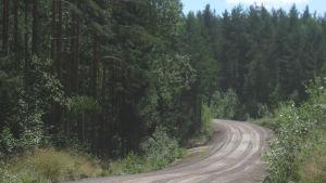 kesäinen metsätie