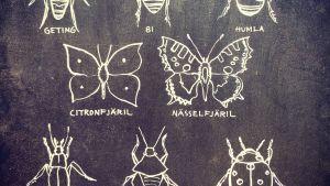 insekter ritade på krittavla