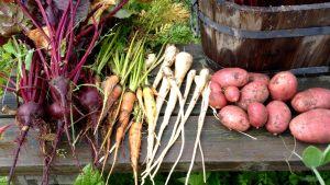 Skördade grönsaker, rödbeta, morot, palsternacka och potatis på en bänk