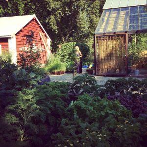 Trdägårdsvy över Trädgården på Strömsö