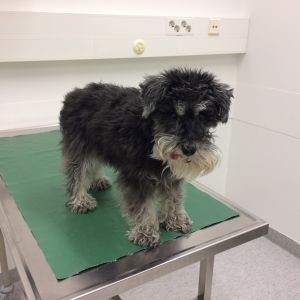 Hund på undersökningsbord