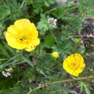 Bild på en gul blomma vid en vägkant. I bakgrunden syns andra gröna växter.