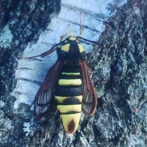 Barnen på förskolan undrar vad för insekt detta är. Den är ca. 4cm lång, hälsar Evve.