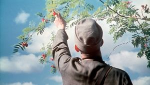 Soldat plockar rönnbär (fortsättningskriget), SA-bild 1941
