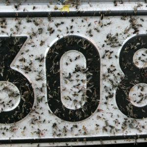 Rekisterikilpi täynnä hyttysiä