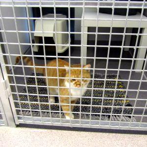 En katt i en bur.