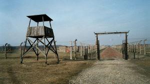 Bild från koncentrationslägret i Auschwitz.