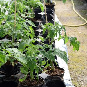 plantor i krukor