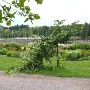 I mitten av bilden ett träd som brutits av på mitten. I bakgrunden blommro och båtar på ån.
