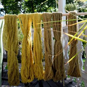 Växtfärgade garn upphäng på en rundstav
