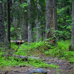 Skogen är lummig