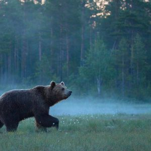 Kotimainen luontodokumentti kertoo ainutlaatuisesta suoekosysteemistä.