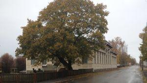 Kaskö stadshus under en regning höstdag