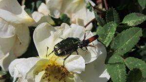 Insekt på insekt